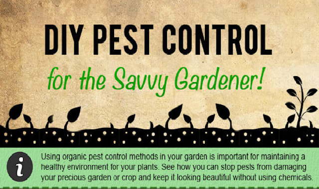 DIY Insect Pest Control for the Vegetable Garden #infographic