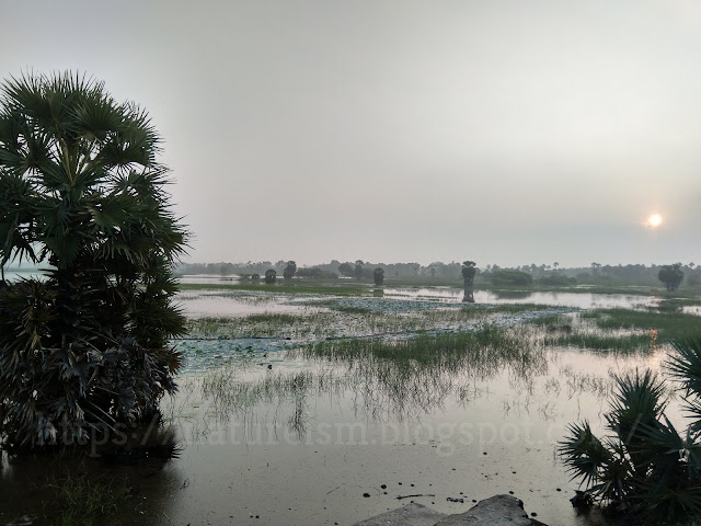 Wetlands flourishing with resources