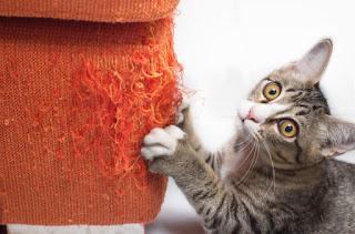 ¿Por qué los gatos rascan las cosas?