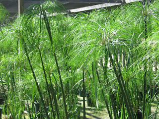 http://tukangtamankaryaalam.blogspot.com/2016/04/4-jenis-tanaman-air-dalam-pot.html