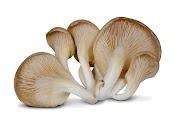 Mushroom Training Center Bagalkot   Mushroom spawn supplier   Mushroom Training