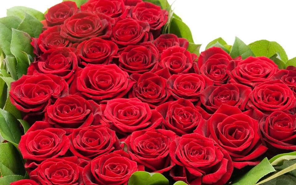 red rose wallpaper image