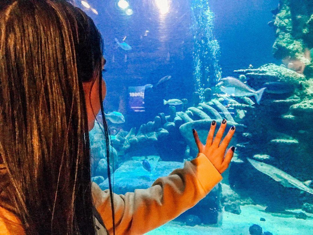 Sea Life London Spot Atraksi Wisata Terbaik London