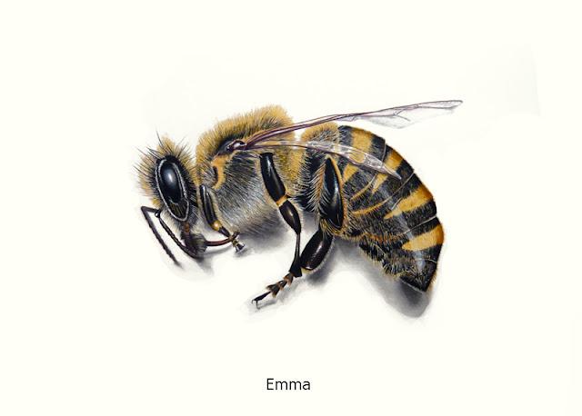 Une abeille  morte dessinée