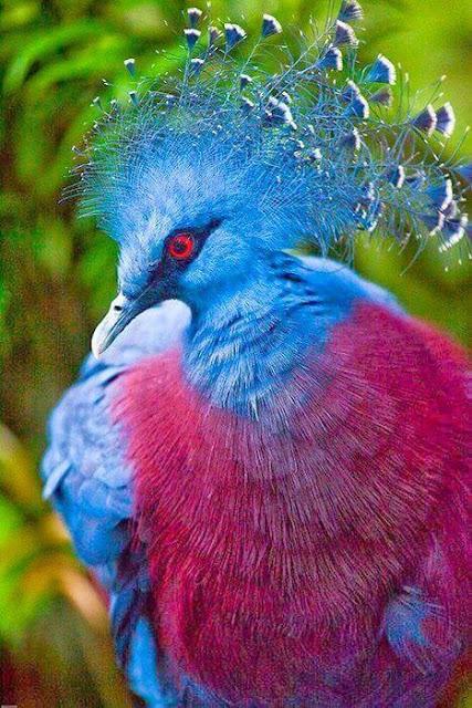 أجمل 16 حيوانًا في العالم