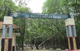 Hutan Mangrove Cilacap Hutan wisata payau Wisata Cilacap