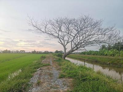 Suasana kampung di Perlis yang menenangkan hati dan mindaa