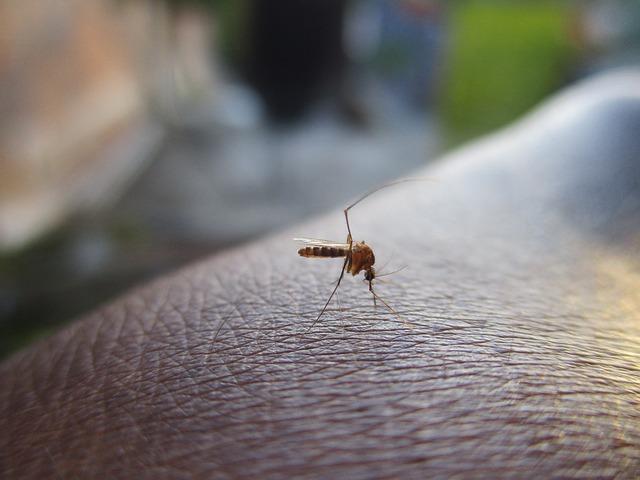Ang pagsugpo sa dengue ay trabaho ng lahat, sa buong taon, tuloy-tuloy ang paglaban natin sa dengue, paano nga ba natin ito masusugpo?
