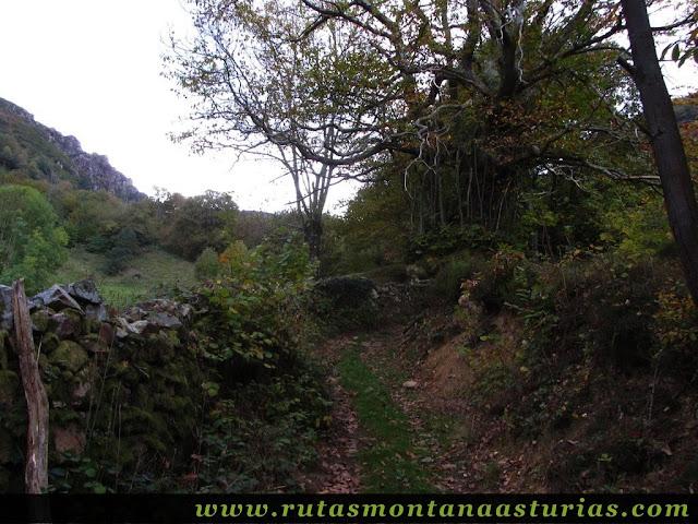 Circular Coañana Saleras: Camino entre pastos y bosque