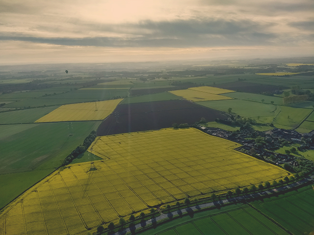 Rapeseed fields from above