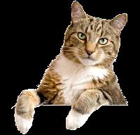 Gato debruçado png