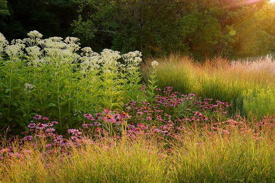 gradina flori perene, peisagistica, firma amenajare gradina cu flori, design horticultor, horticultura peisagistica