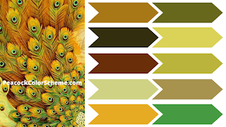 peacock color images, peacock color palettes