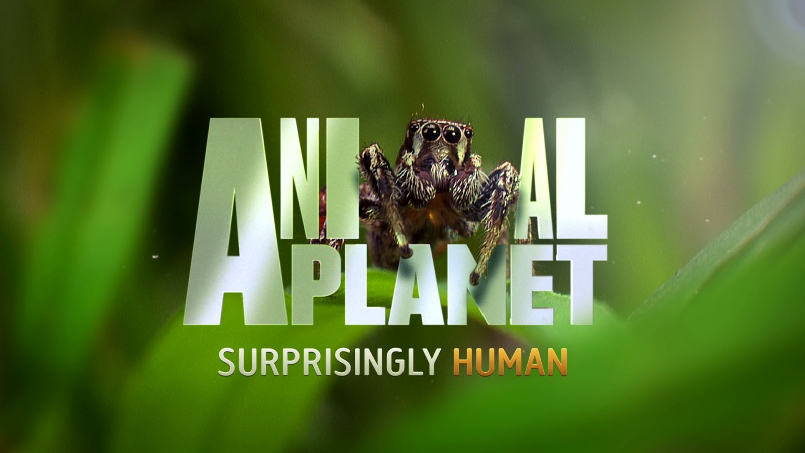 Animal Planet Tv With Thinus Breaking Multichoice And Discovery
