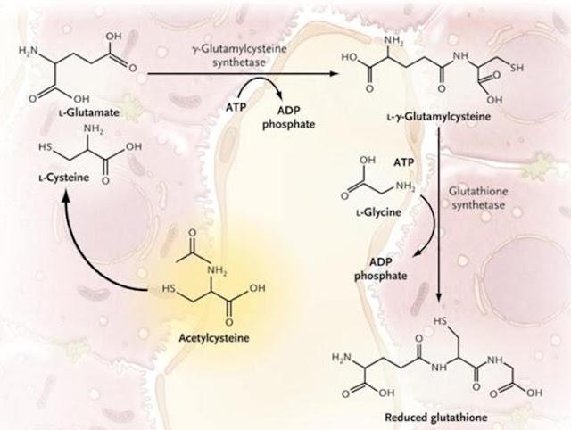 Toksisitas Parasetamol dan Cara Menanggulanginya