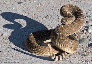 ular derik