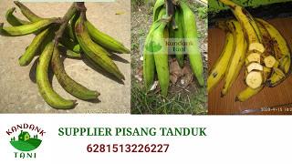 Supplier pisang tanduk di bekasi