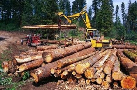 Trees Today, Gone Tomorrow: DEFORESTATION.. causes ...