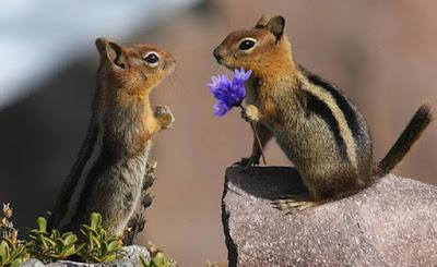 Μοναδικές φωτογραφίες ερωτευμένων ζώων!