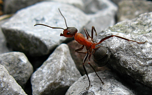 """Заснеха """"Сребристите мравки от Сахара"""" най-бързите атлети в света (ВИДЕО)"""