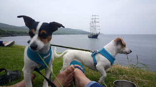 Puppies with the tall ship in the background