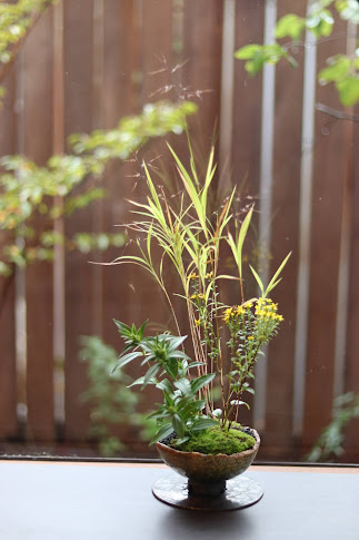 山野草盆栽教室作品例 ヒメアブラススキ アキノキリンソウ ササリンドウ