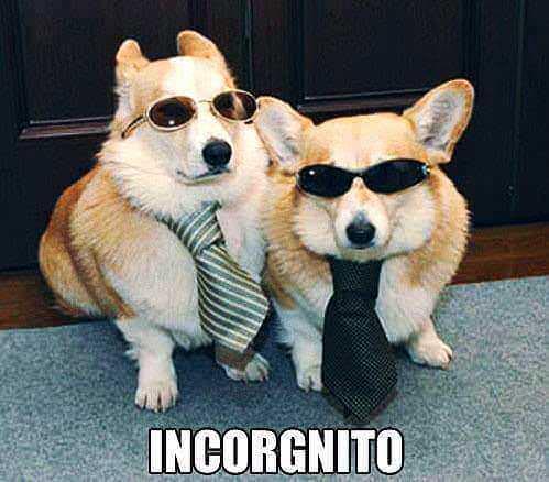 Funny Incorgnito Corgi Dogs Meme Picture