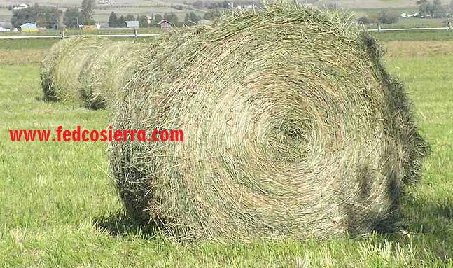 Rumput yang di baled untuk dijadikan Hay