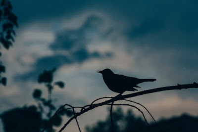 Photo of a bird tweeting early in the morning