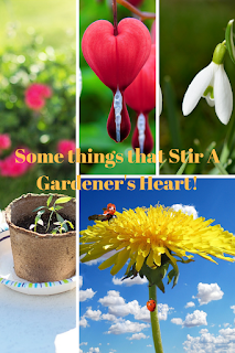 #gardeners gifts #valentines day gifts for gardeners #winning combinations for the gardener