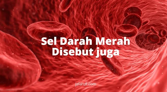 sel darah merah disebut juga dengan eritrosit.