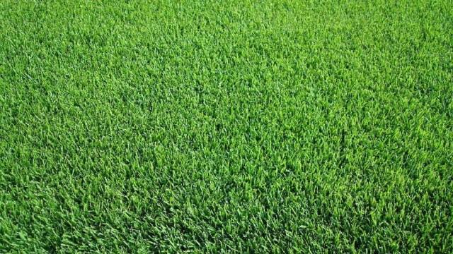 rumput taman minimalis