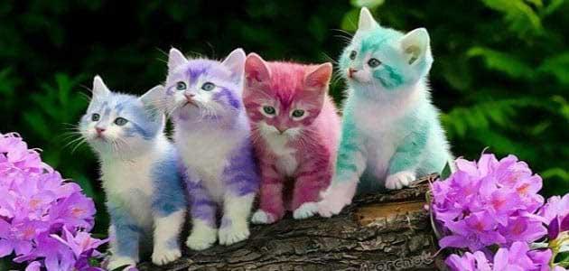 تفسير رؤية القطط الملونة في المنام للعصيمي 2021