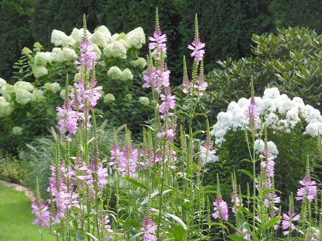 kompozycje ogrodowe, hortensje, odętka