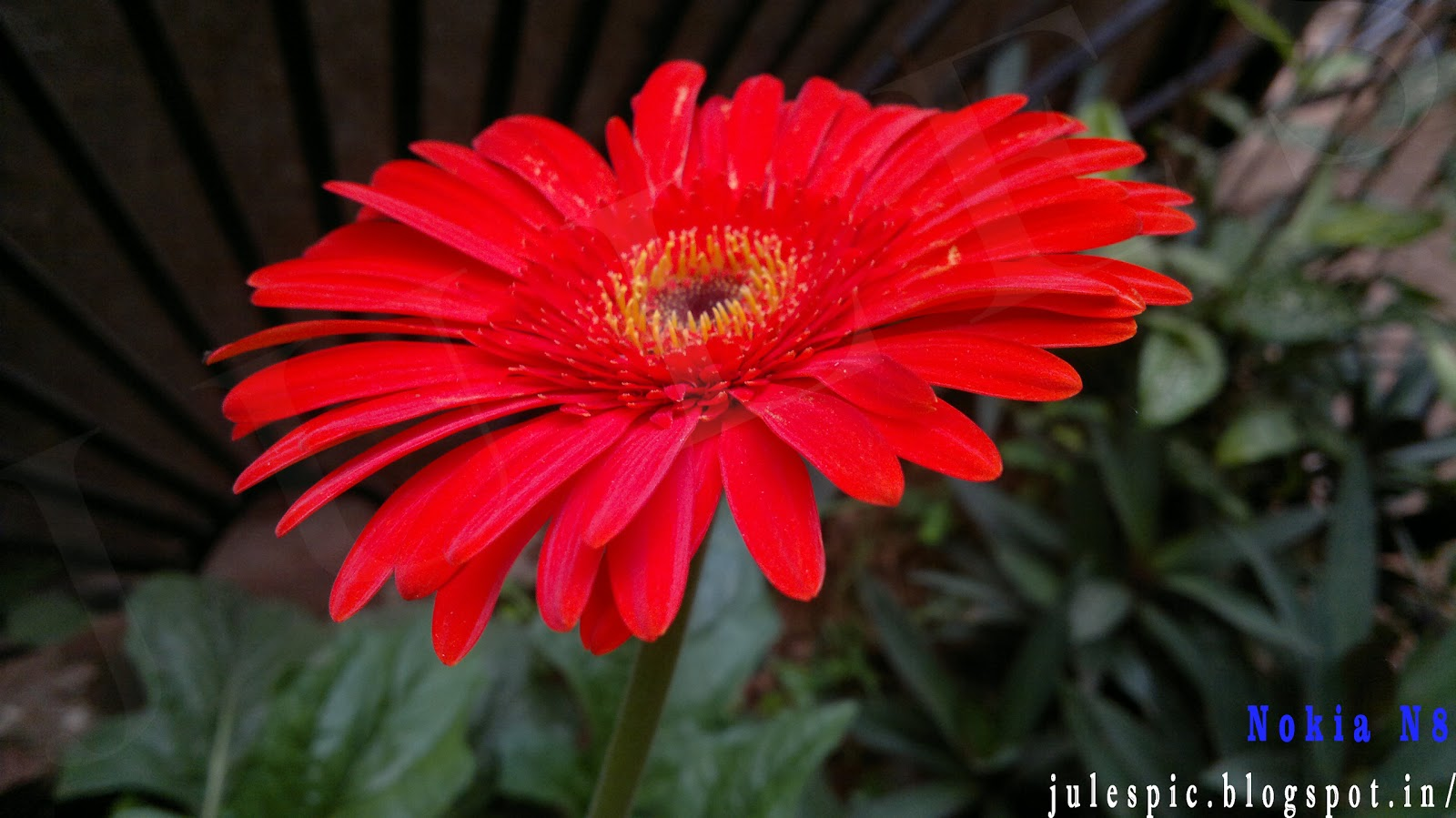 Pictures Of Summer Flowers In India Impremedia Net