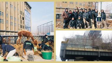 Alpacas peruanas ayudan a los jardineros del High Line