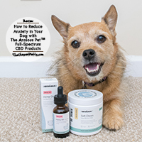 The Anxious Pet CBD for Dogs