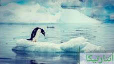 من يعيش في القارة القطبية الجنوبية المتجمدة؟