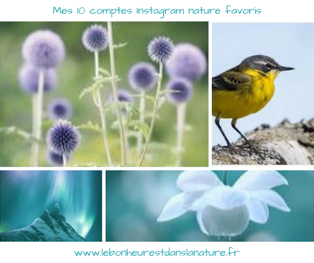 comptes instagram favoris nature
