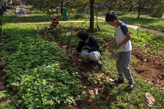 Hoạt Động Trải Nghiệm Nông Nghiệp Trong Vườn