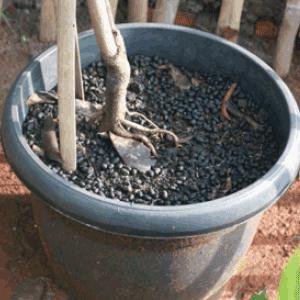 biaya produksi pupuk organik
