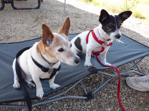 My little helpers: Quinn & Maddie :)