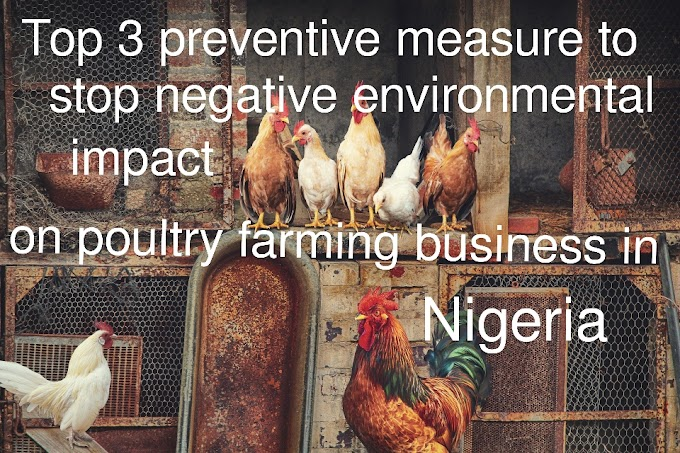 How to prevent negative environmental impact on poultry farming business in Nigeria