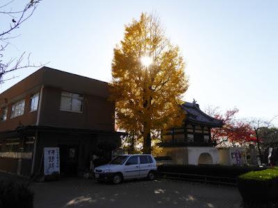 野崎観音・慈眼寺(じげんじ)の紅葉 銀杏の木 休憩所