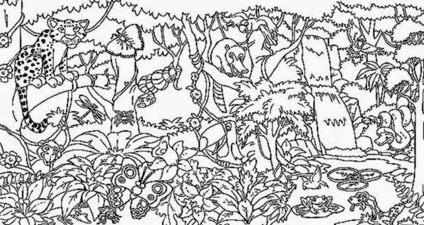 Rainforest coloring sheets free coloring sheet for Forest animals coloring pages