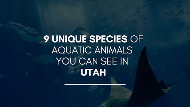 9 unique species of aquatic animals you can see in utah