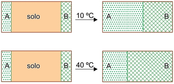 UNESP 2021: A figura mostra um experimento realizado com duas espécies de gramíneas, A e B. As gramíneas foram inicialmente plantadas em uma curta faixa nos extremos opostos de duas caixas retangulares contendo solo.