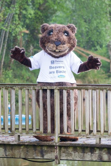 Devon Wildlife Trust - Name that Beaver