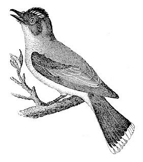bird image illustration tree antique digital download