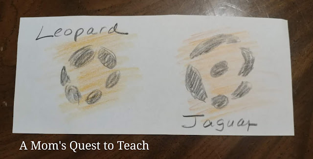 drawing of leopard spot and jaguar spot with text of cat names